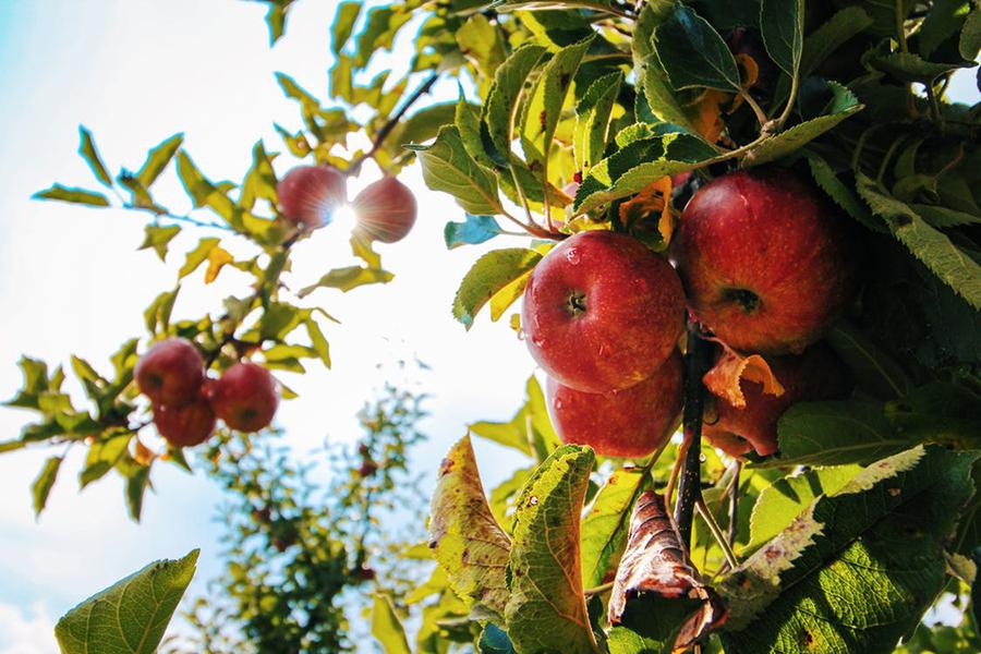 Alimentazione biologica e altri trend: come cambia la nostra routine alimentare
