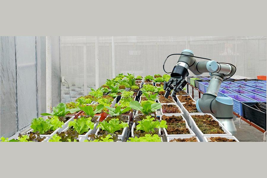 Filiera agroalimentare italiana e meridionale, le sfide future
