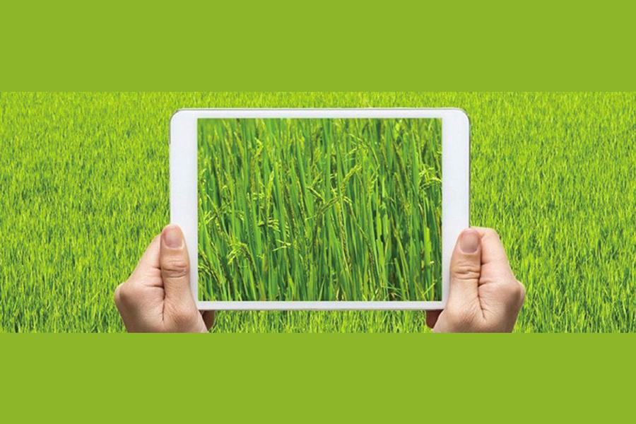 Agricoltura 4.0, un approccio mediterraneo per il rilancio del brand territoriale